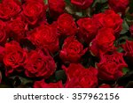 Stock photo background with red roses 357962156