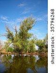 danube delta landscape   Shutterstock . vector #35796268