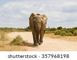 Young African Elephant Running...