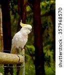 parrot cockatoo. australia ... | Shutterstock . vector #357968570