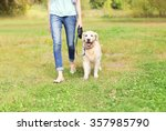 Stock photo owner with golden retriever dog walking together in park 357985790