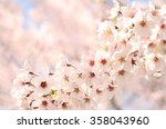 cherry blossom   | Shutterstock . vector #358043960
