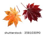 two autumn maple leaves | Shutterstock . vector #358103090