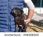 black pug dog being cared by a... | Shutterstock . vector #358308203
