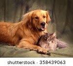 Stock photo a golden retriever is lying on a green studio backdrop with a big furry gray cat resting between 358439063