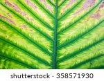 leaf background. | Shutterstock . vector #358571930