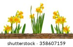 daffodils  behind a wooden...   Shutterstock . vector #358607159