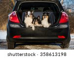 Three Collie Dogs In A Car Trunk