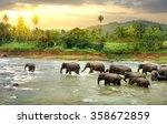 elephants in river | Shutterstock . vector #358672859