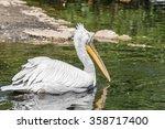 One Big White Pelican Floats O...