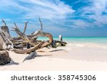 Branches On The Beach Of Cayo...
