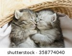 Stock photo cute tabby kittens sleeping and hugging in a basket 358774040