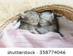 Stock photo cute tabby kittens sleeping and hugging in a basket 358774046