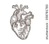 vintage engraved human heart.... | Shutterstock .eps vector #358781783