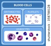 vector set of types of blood... | Shutterstock .eps vector #358788128