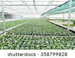 Interior Of A Greenhouse  Full...