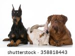 Three Different Purebred Dogs...