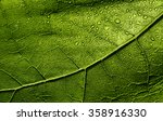Wet Leaf Bright Green