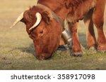 cow bell | Shutterstock . vector #358917098