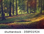 north scandinavian pine forest  ... | Shutterstock . vector #358931924