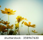 close up in cosmos flower at... | Shutterstock . vector #358967630