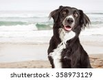 Closeup Photo Of A Happy And...