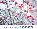 Ice On Berries Winter Background