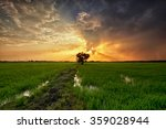 Green Paddy Field With...