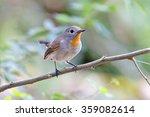 taiga flycatcher ficedula parva ... | Shutterstock . vector #359082614