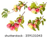 Set Ripe Apples On A Branch...