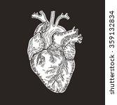 vintage engraved human heart.... | Shutterstock . vector #359132834