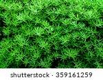 green bloom closeup textured... | Shutterstock . vector #359161259