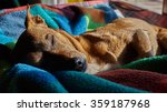 sleeping dog | Shutterstock . vector #359187968