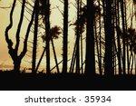 tofino  vancouver island | Shutterstock . vector #35934