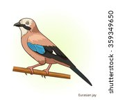 eurasian jay bird learn birds... | Shutterstock . vector #359349650
