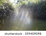 Stock photo overgrown wild roses with flare 359409098