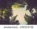 Palm Leaves On Sky Background...