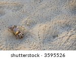 Ghost Crab On The Sandy...