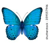 Stock photo beautiful pale blue butterfly the common yeoman butterfly cirrochroa tyche upper wing part in 359557946