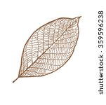 vector nut leaf  isolated on... | Shutterstock .eps vector #359596238