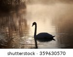 swan | Shutterstock . vector #359630570