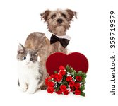 Stock photo a cute little kitten and terrier mixed breed dog together with a valentine s day candy heart and a 359719379