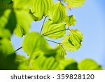 fresh verdure  | Shutterstock . vector #359828120