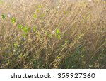 small tree need light and... | Shutterstock . vector #359927360