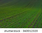 green field with young wheat | Shutterstock . vector #360012320