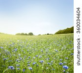 meadow with blue cornflowers ... | Shutterstock . vector #360034604