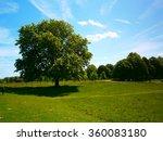leafy tree on a lawn in... | Shutterstock . vector #360083180