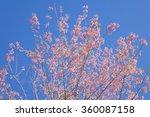 wild himalayan cherry flower... | Shutterstock . vector #360087158