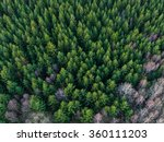 Aerial View Of Winter Forest...