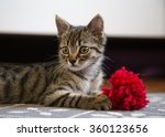 Stock photo little gray kitten portrait 360123656